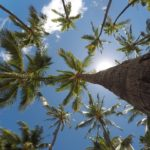 henderson tree service